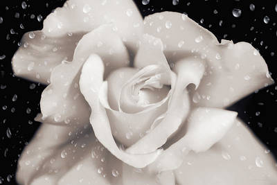 Art Print featuring the photograph Raindrops On Sepia Rose Flower by Jennie Marie Schell