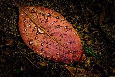 Photograph - Raindrops On The Fallen - I by Mark Robert Rogers