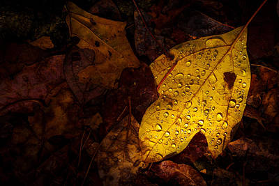 Photograph - Raindrops On The Fallen - II by Mark Robert Rogers