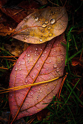 Photograph - Raindrops On The Fallen - IIi by Mark Robert Rogers