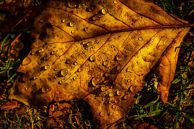 Photograph - Raindrops On The Fallen - Iv by Mark Robert Rogers