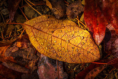 Photograph - Raindrops On The Fallen - V by Mark Robert Rogers