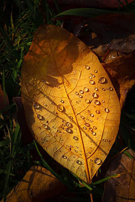Photograph - Raindrops On The Fallen - Vi by Mark Robert Rogers