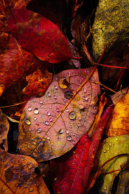 Photograph - Raindrops On The Fallen - Viii by Mark Robert Rogers