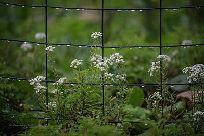 Photograph - Raindrops On The Garden Fence by Karen Casey-Smith
