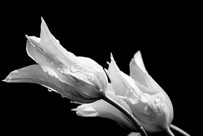 Photograph - Raindrops On Tulips Bw by Teresa Wilson