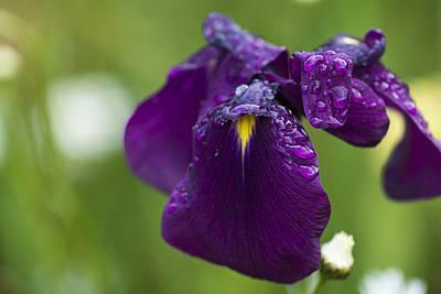 Photograph - Raindrops by Robert Potts