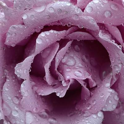 Photograph - Raindrops Rose by Cheryl Miller