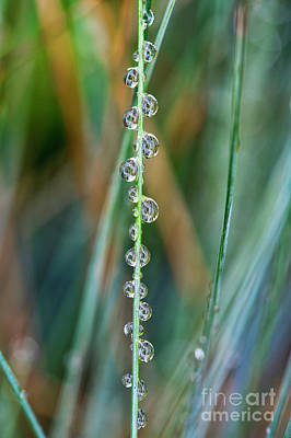 Natural Abstract Photograph - Raindrops by Tim Gainey