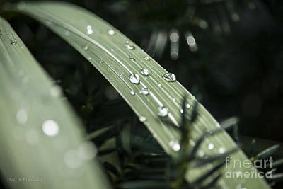 Photograph - Raindrops by Todd Blanchard