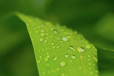 Photograph - Rainfall by Steven Green