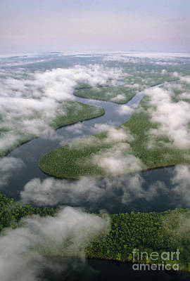 Photograph - Rainforest And Meandering River In Borneo by Frans Lanting MINT Images