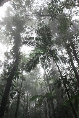 Photograph - Rainforest by AR Annahita
