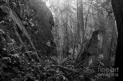 Photograph - Rainforest Black And White by Sharon Talson