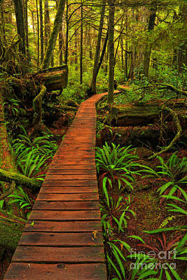 Photograph - Rainforest Boardwalk Portrait by Adam Jewell