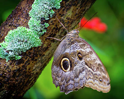 Photograph - Rainforest Butterfly by Mark Andrew Thomas