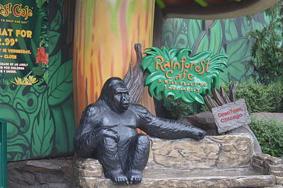 Photograph - Rainforest Cafe by Michelle Hoffmann