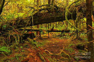 Photograph - Rainforest Chaos by Adam Jewell