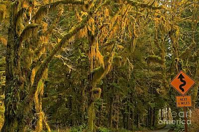 Photograph - Rainforest Curves by Adam Jewell