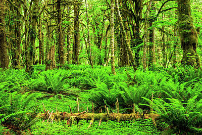 Photograph - Rainforest Ferns by Spencer McDonald