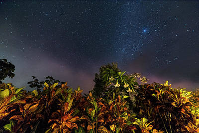 Photograph - Rainforest Flowers Belmopan Belize Starry Skies 2 by Toby McGuire