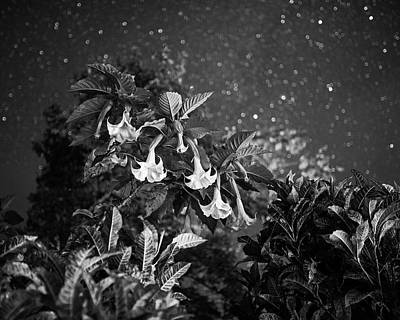 Photograph - Rainforest Flowers Belmopan Belize Starry Skies Black And White by Toby McGuire