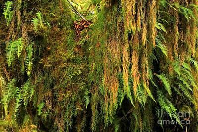 Rainforest Hanging Gardens Art Print by Adam Jewell