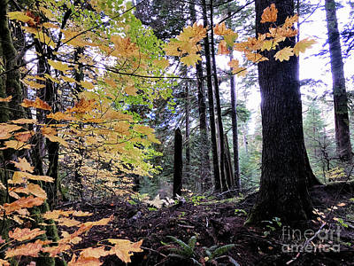 Photograph - Rainforest In The Fall 2 by Victor K