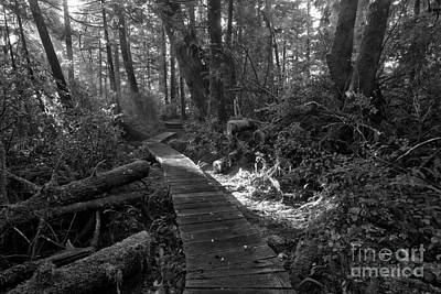 Photograph - Rainforest Light Beam Black And White by Adam Jewell