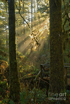 Photograph - Rainforest Lightbeams by Adam Jewell