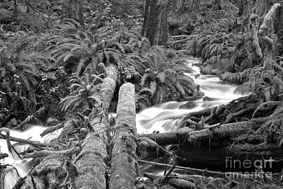 Photograph - Rainforest Logs - Black And White by Adam Jewell