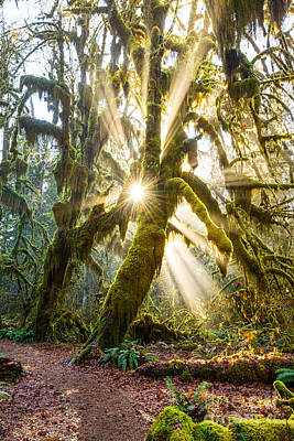 Olympic National Park Photograph - Rainforest Magic by Jamie Pham