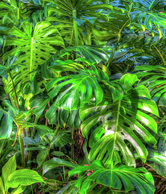 Photograph - Rainforest by Mark Dahmke