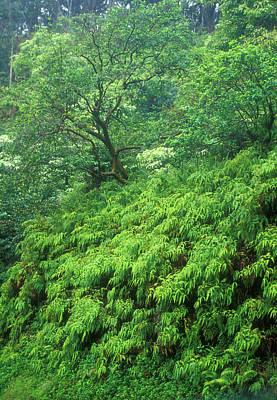 Photograph - Rainforest Maui by John Burk