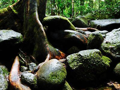 Photograph - Rainforest Floor - Mossman Gorge, Far North Queensland, Australia by Lexa Harpell