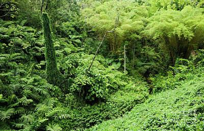 Hapuu Photograph - Rainforest Overgrowth - Big Island by Charmian Vistaunet