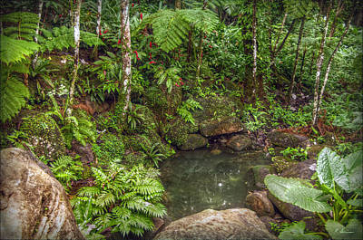 Photograph - Rainforest Paradise by Hanny Heim