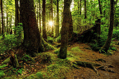 Northwest Photograph - Rainforest Path by Chad Dutson