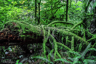 Photograph - Rainforest by Patrick Boening