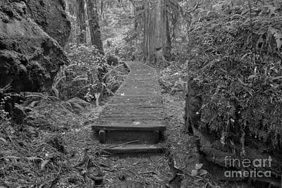 Photograph - Rainforest Recycling Trail Black And White by Adam Jewell