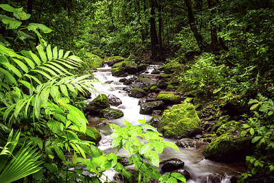 Photograph - Rainforest River by David Morefield