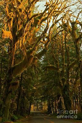 Photograph - Rainforest Road Portrait by Adam Jewell