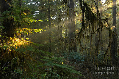 Photograph - Rainforest Spotlight by Adam Jewell