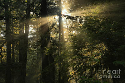 Photograph - Rainforest Starburst by Adam Jewell