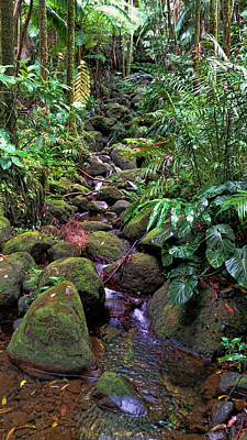 Photograph - Rainforest Stream by Pamela Walton