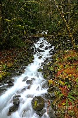 Photograph - Rainforest Streambed by Adam Jewell