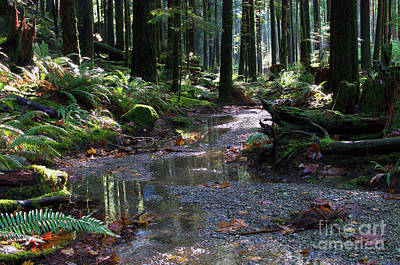 Photograph - Rainforest Trail 2 by Sharon Talson