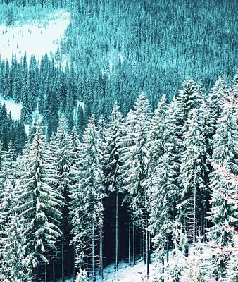 Digital Art - Rainforest by Uma Gokhale