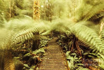 Photograph - Rainforest Walk by Jorgo Photography - Wall Art Gallery