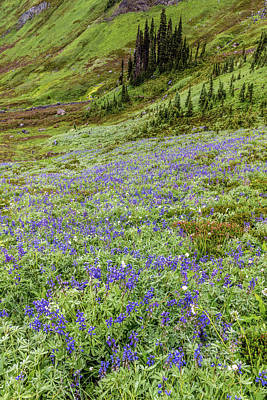 Photograph - Rainier Alpine Wildflowers by Pierre Leclerc Photography